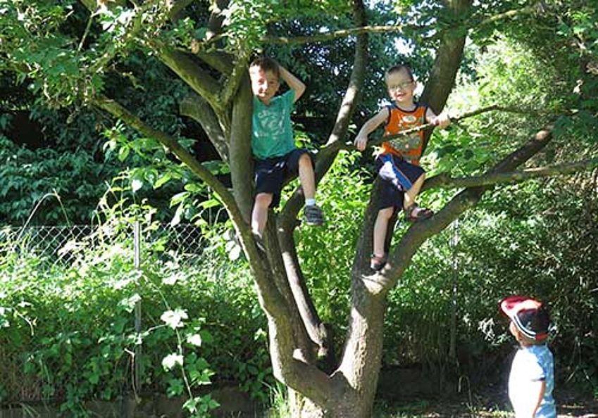 Kinder auf dem Baum